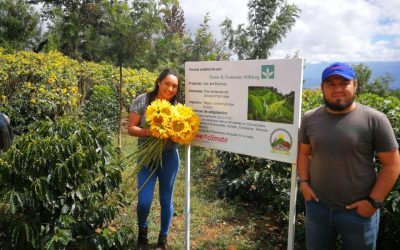 Sunflowers as Climate-Smart Agricultural Practice