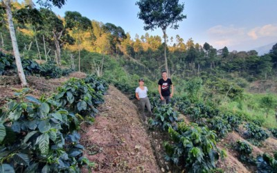 Innovating Change in Huehuetenango: How Producers are Adapting