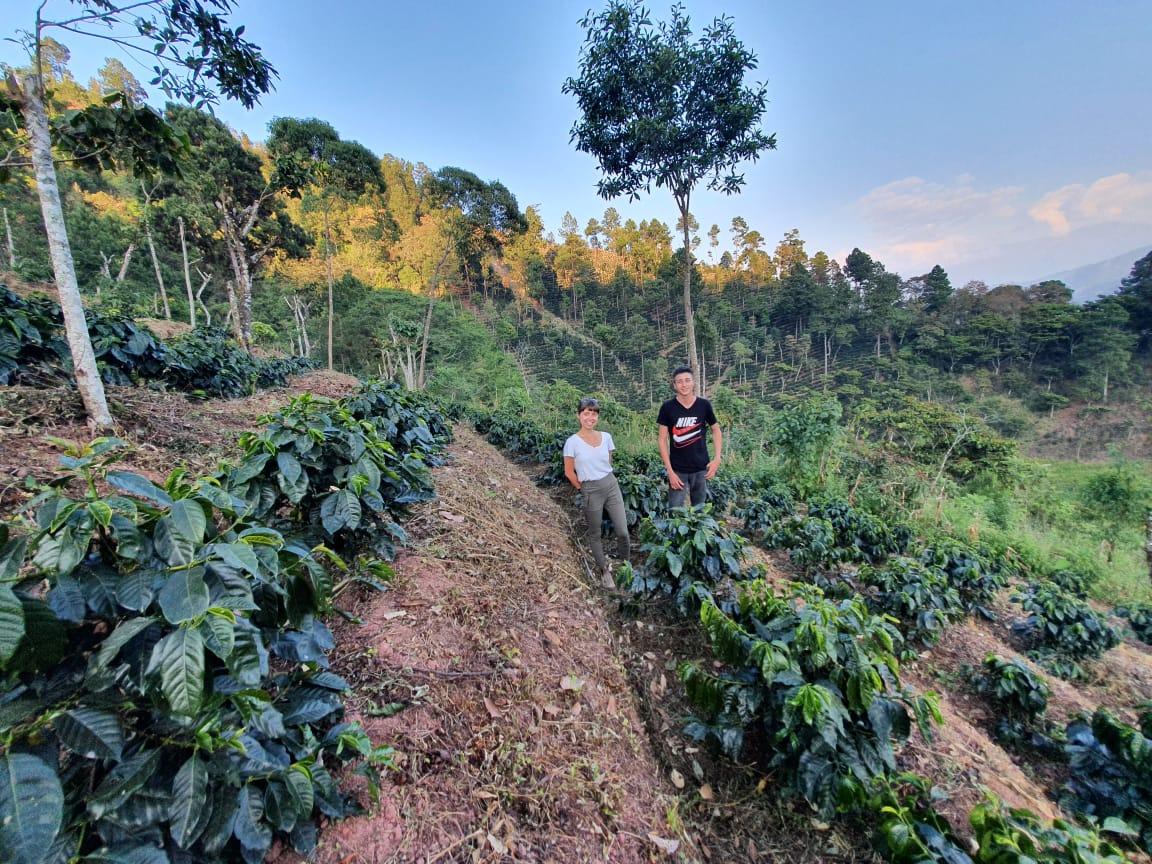 Farmers standing between coffee rows