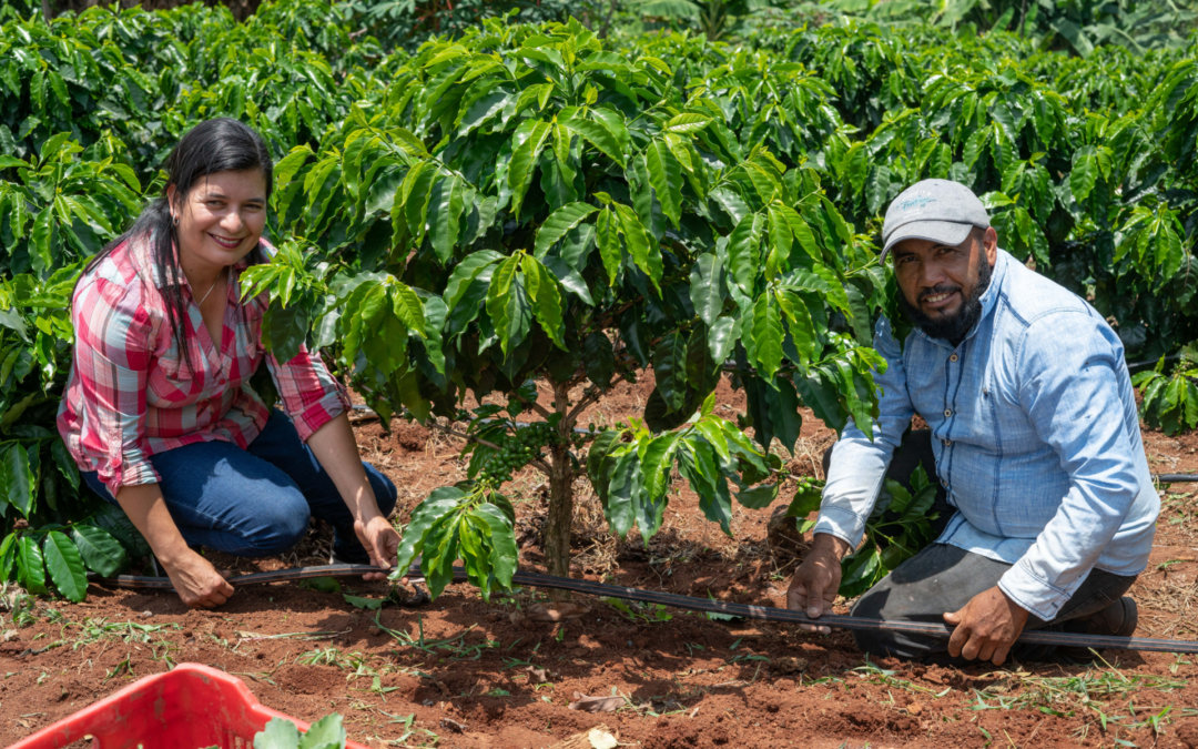 The coffee&climate toolbox is now part of Fairtrade's Coffee Standard