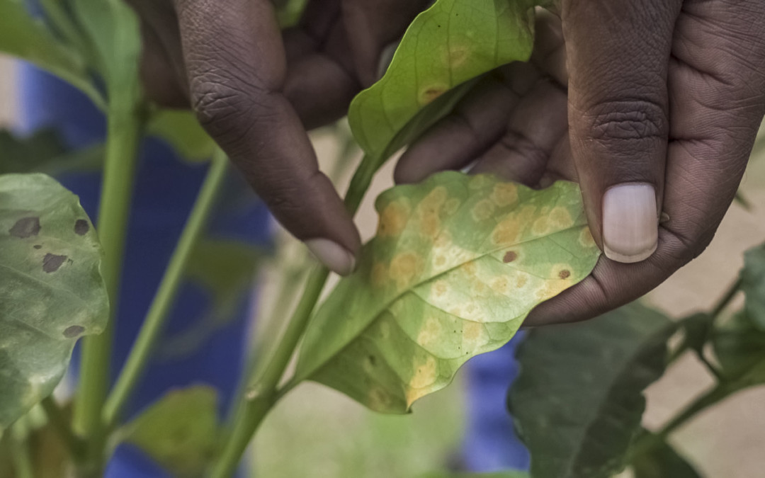 What you always wanted to know about coffee and climate change